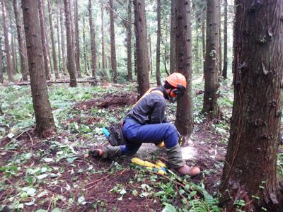 保育間伐・枝打ち